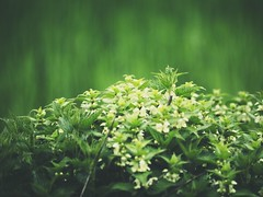 Nature Bokeh | 1. Mai 2019 | Schleswig-Holstein - Germany (torstenbehrens) Tags: nature bokeh | 1 mai 2019 schleswigholstein germany olympus penf 7xef50149mm f28