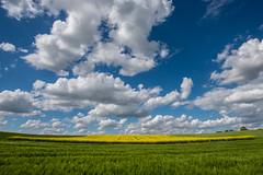 Bertem (BE) (de_frakke) Tags: wolken clouds mosterdzaad landschap landscape