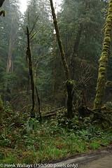 Grayback campground (henk.wallays) Tags: inat josephinecounty usa siskiyounationalforest oregon aaaa graybackcampground location henkwallays closeup macro nature natuur wildlife size date year2019 medium