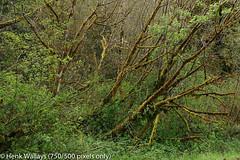 DSC01954 medium.jpg (henk.wallays) Tags: california usa inat bradsplace aaaa delnortecounty location henkwallays closeup macro nature natuur wildlife size date year2019 medium