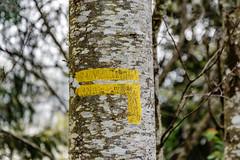 19-Le balisage indique à gauche toute!! (Alain COSTE) Tags: 2019 forêt hautevienne lavarache limousin nikon ocb printemps randonnée eymoutiers france