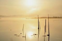 Morning on the lake. Lebedin. Ukraine. (ALEKSANDR RYBAK) Tags: изображения восход утро солнце озеро вода туман свежесть остров камыш отражение природа пейзаж небо облака images sunrise morning sun lake water fog freshness isle reed reflection nature landscape sky clouds
