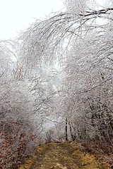 Ice Canopy (Karen_Chappell) Tags: newfoundland nfld stjohns ice icy trees branches tree path trail signalhill avalonpeninsula atlanticcanada eastcoast canada spring rain weather freezingrain frozen white canopy nature scenery scenic landscape canonef24105mmf4lisusm