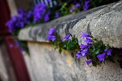 Street Spring (NathalieSt) Tags: europe france city nikon nikond750 nikonpassion nikonphotography rue street streetphotography vichy ville