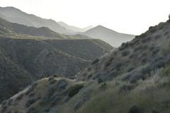 _DSC0399 (AnkaKarewicz) Tags: sespe wilderness