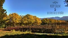 Te estamos esperando !!! . . www.carpediemelbolson.com.ar  @carpediem_elbolson @carpediemelbolson @carpediem.cabanasysuites @turismoelbolson #ElBolsonTodoElAño #TeEstamosEsperando #quieroestarahi #cabañascarpediem #cabañas #alojamiento #turismoelbolson #e (Cabañas & Suites) Tags: alojamiento patagonia turismoelbolson bestvacations travelers bienestar comarca elbolson suites instagram surargentino carpediem elbolsontodoelaño vacaciones viviargentina argentina teestamosesperando patagoniaargentina turismoargentina holidays visitargentina instatrip comarcaandina paisaje quieroestarahi cabañascarpediem turismo cabañas travel montañas