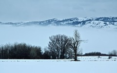 Blue Winter Morning (ebergcanada) Tags: winter snow tree landscape silhouette mountain fog cloud idaho