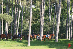 Le side pull pour la balade dans la pinède... (mamnic47 - Over 10 millions views.Thks!) Tags: 20042019 sigma150600mm maresaintjames 6c8a3802 pin pinède cavaliers cheval poney sidepull