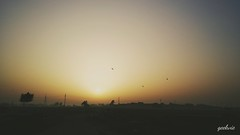 wake the sun (geekvie) Tags: sun sunrise birds nature fields horizon spring egypt silhouette morning