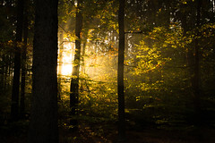 Far enough (Petr Sýkora) Tags: yellow forest trees morning sun light shadows darkness