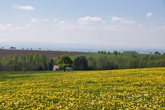 Campagne fleurie (Croc'odile67) Tags: nikon d3300 sigma contemporary 18200dcoshsmc paysage landscape ciel sky fleurs flowers prairie campagne