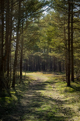 Mörkveden (That Swedish Varg) Tags: gotland forest nature fairytale fantasy woods sweden scandinavium