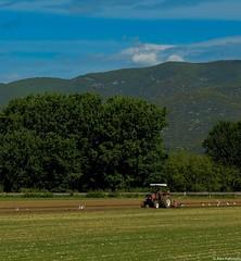 Field ploughing (akatsoulis) Tags: sunnyday nikkor50mm14g nikond5300 macedonia greece landscape xanthi fieldploughing macedoniagreece makedonia macedoniatimeless macedonian macédoine mazedonien μακεδονια македонијамакедонскимакедонци