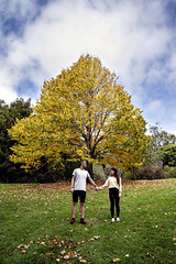Together in Botanical Gardens (Photos By Dlee) Tags: sonyalphaa7iii sonya7iii sonya73 sony sonyalpha mirrorless fullframe fullframemirrorless tamron2875mmf28diiiirxd tamron zoom tamron2875mmf28 photo photosbydlee photography australia sydney newsouthwales nsw autumn botanicalgardens bluemountains trees colors colorful