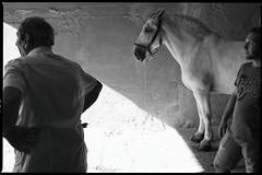 Sicily, Horse (MarcelloCeraulo | Portfolio) Tags: sicilia sicily silhouette fujix100t fuji monochrome blackandwhite horse lighting shadows