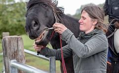 Just a bit more...... (DeePee64) Tags: horse horsebit tack yorkshiredalespony matttheydpony