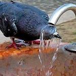 অসহ্য গরমে আরাম পেতে কারনীয় thumbnail
