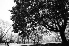 small and great (Andrew.King) Tags: black white monochrome blacandwhite contrast shadow highlights people trees tree oak park shade bright sunny kodak ektar 100 path imbalanced composition nikon f3hp f3