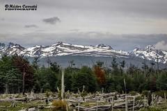 Camino a Ushuaia 7 (© hacfoto) Tags: nubes hielo nieve montaña lenga