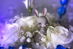 Lost in Memories (koalakrashdolls) Tags: bjd doll tobi cocoriang bunny rabbit koalakrash koala krash dolls cute kawaii toy figure