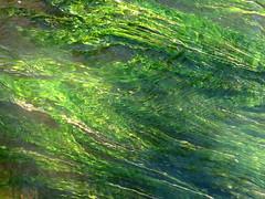 green flow (vertblu) Tags: underwater underwaterflora green shadesofgreen stream streamsurface bythestream örtzestream water waterabstract distorted distortion ripples rippling abstract abstractnature abstracted abstraction natureabstracted flow flowing flowingwater vert vertblu aquaticplants emerald