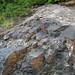 Impact pseudotachylite (Sudbury Breccia, Paleoproterozoic, 1.85 Ga; Windy Lake Northwest roadcut, Sudbury Impact Structure, Ontario, Canada) 3