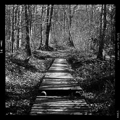 Where do we go from here ? (vincent-photo) Tags: analog blackwhite bw caffenol caffenolch film hp5 ilford mediumformat tlr 6x6 vintage yashica yashica12 yashicaffenol
