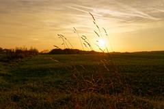end of day light (Coup330) Tags: sunset sky nature tree green sun clouds landscape yellow light outside national golden hour sony rx1rii zeiss sonnar f2 frame autumn color grass sonnenuntergang gelb grün licht fullframe