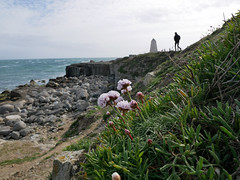 breezy in Weymouth and Portland 17/52 (auroradawn61) Tags: weymouthandportland dorset uk england april spring 2019 sunny breezy lumixgx80 coast seaside portlandbill pinks explored thrift interestingness 52weeksin2019project