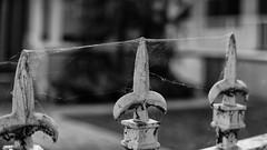 estate.jpg (remiklitsch) Tags: gate cobweb blackandwhite fence leica remiklitsch hose la estate