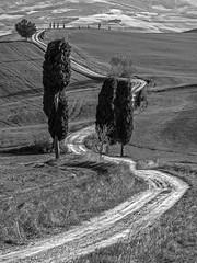 Gladiator Alley (Blende1.8) Tags: tuscany tuscan toskana toscana italy italien italia bellaitalia landscape landscapes tree trees baum bäume zypresse zypressen cypress path feldweg hill hills hügel toskanisch mono monochrome schwarzweiss sw bw bnw landschaft weite