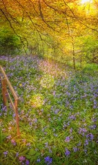 Scottish Bluebells (Michelle O'Connell Photography) Tags: bearsden hillfoot pendicleroad bluebells natureflowers naturephotography nature campanula hairbell ladiesthimble plant scottishbluebell woodland wildflower michelleoconnellphotography eastdumbartonshire