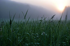 Foggy morning10 (Franck gallery) Tags: morning fog drops goutte matin brouillard green vert landscape paysage campagne coutryland soft