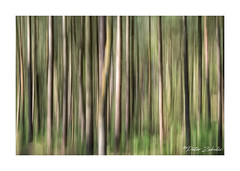 ICM Blidworth Woods (PeteZab) Tags: icm movement blur tree wood forest abstract lines peterzabulis petezab blidworthwoods nottinghamshire uk nature