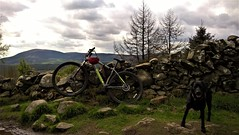 Rest (Tobymeg) Tags: mabie bike trail sky criffel dog labrador wall seven stanes trees clouds lumia 640 lte