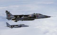 JAGUAR XZ355 FJ AARA5 040795 CLOFTING P (Chris Lofting) Tags: jaguar gr3 xz355 fj 41 aara5 raf