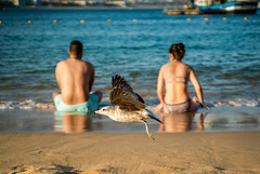 El momento perfecto (gyogzz) Tags: couple beach lovely sony alpha a7sii bird sunset los cabos baja california landscape amazing incredible encuadre perfect photographie