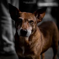 Perro callejero (Fran Orozco Fotografía) Tags: photo photos photography photographs foto fotos fotografía fotografías fotógrafo nikon dslr colombia 50mm ilovephotography dog
