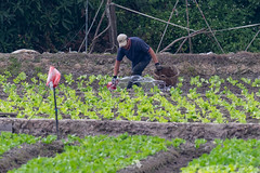 _5ND7399_LR_LOGO (Ray 'Wolverine' Li) Tags: hongkong farming farm citylife asian hongkonglife farmer asiafavorites happyplanet