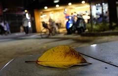 Leaf (theq629) Tags: taipei taiwan daan leaf street store