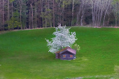 Kleines Wiesenglück - small meadow luck (rotraud_71) Tags: spring meadow flourishingtree hut forest