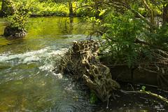 Rio de Nutrias...!!! (Camelia-5) Tags: coruña río verdes árboles agua
