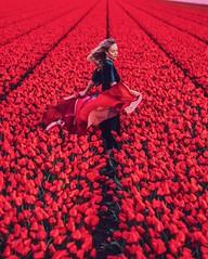 Holland (hobopeeba) Tags: beautiful travel photos