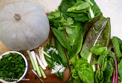 April 25th, 2019 Veg for today's risotto lunch (karenblakeman) Tags: cavershamgarden caversham uk vegetables food squash springonions pakchoi swisschard lovage lettuce redveinedsorrel frenchsorrel wildgarlic ramsons april 2019 2019pad reading berkshire