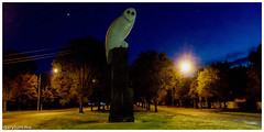 The Owl Statue on Saturday morning (garydlum) Tags: owlstatue publicart canberra australiancapitalterritory australia