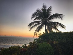 Bali Sunset (awevans4) Tags: tabanan red silhouette palm sun indianocean ocean iphone sunset bali indonesia