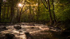 An Afternoon in the Smokies (James Duckworth) Tags: cascades greatsmokymountainsnationalpark jamesduckworthphotography appalachians fineartphotography forest rapids river rocks trees water