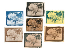 Shades of Cyanotype (Attila Pasek (Albums!)) Tags: 8x10 cyanotype tree print contact tea toned winetannin coffee paper prussianblue colour