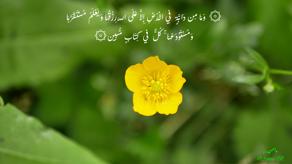 the world s most recently posted photos of quotes and spring