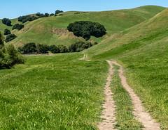 Country Road (channel locks) Tags: grass california states road olympusomdem1mkll green hills oak briones